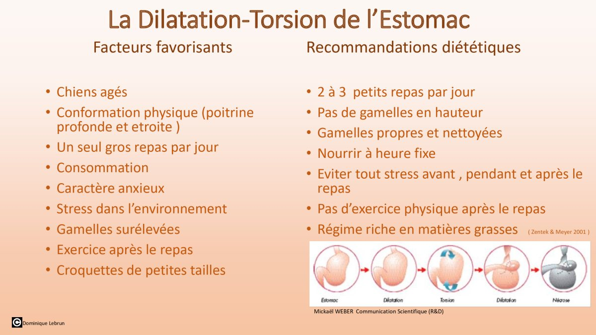 Dilatation de l'estocmac