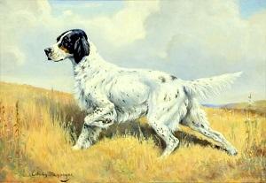 Setter Anglais par S. Edwin Megargec 1883-1958.