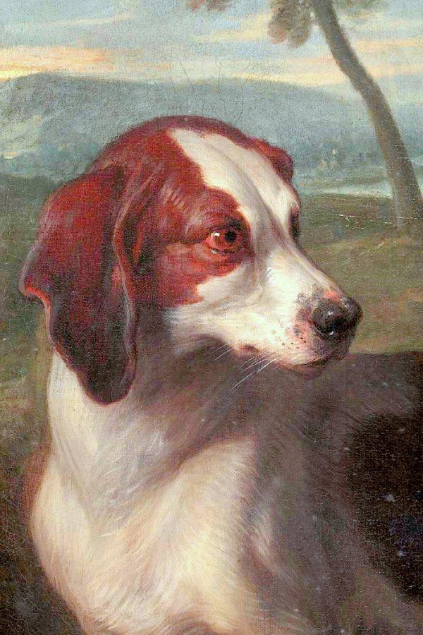 5. Portrait dun chien de chasse