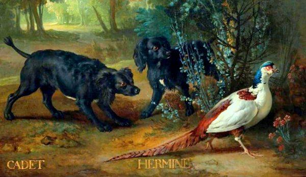 Fontainebleau : expo J-B Oudry et les chiens de Louis XV 9.-Scene-du-faisan-blanc-avec-Cadet-et-Hermine.